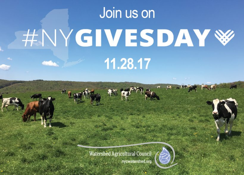 Join us on NY Gives Day