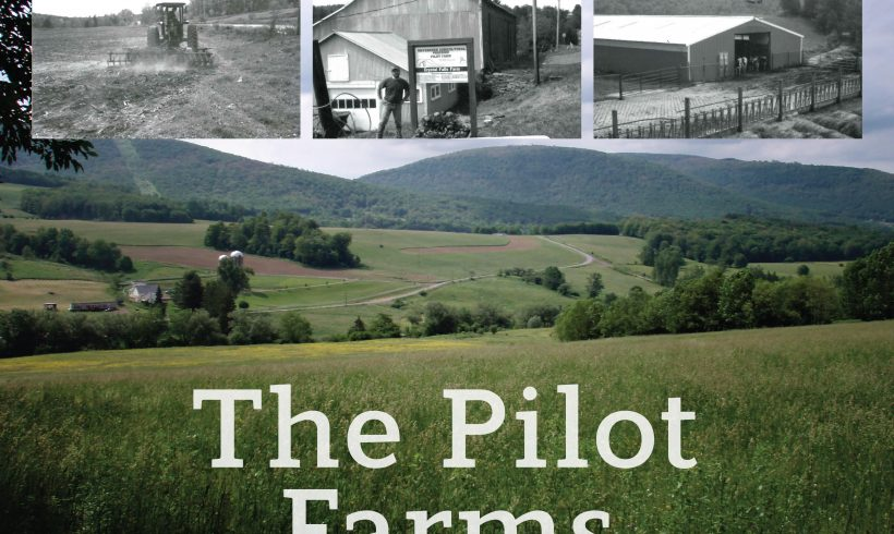 Celebrating 25 years: The Pilot Farms