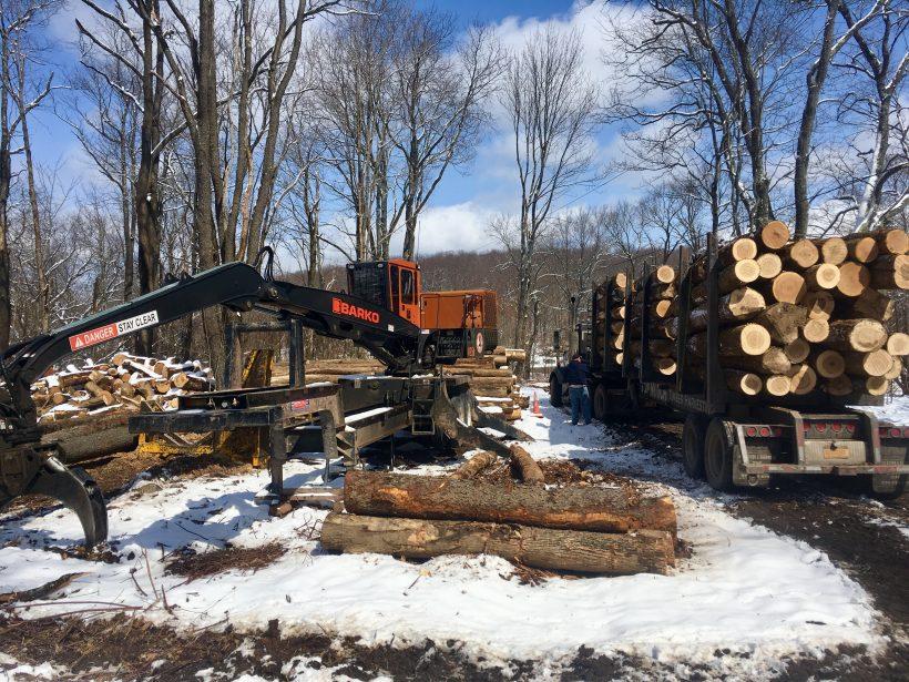 Press Release: Council Celebrates Success of Forest Conservation Program