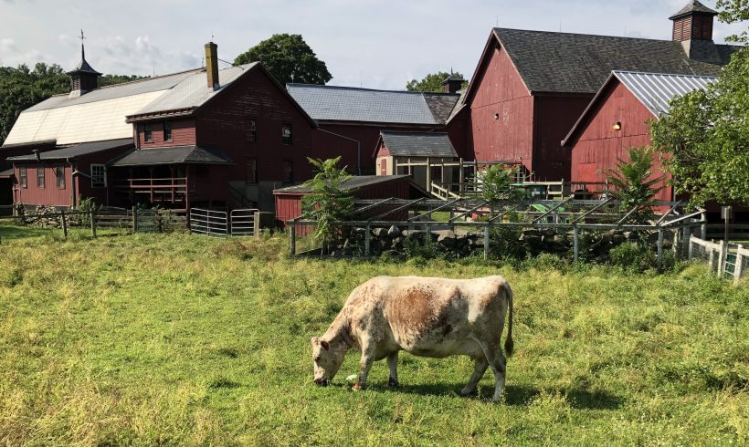 Council Awarded Climate Resilient Farming Grant