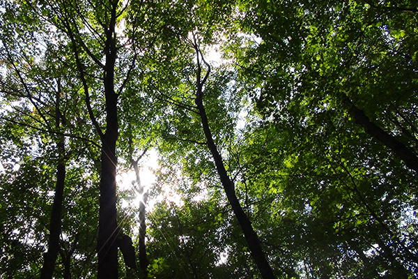 Forestry Easement Pilot Program Launched