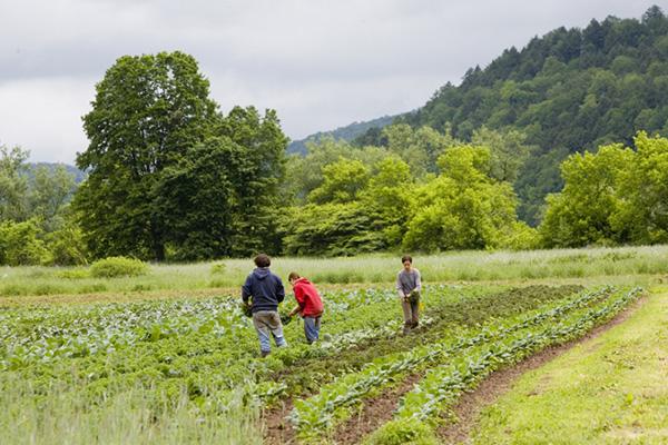 Agricultural Conservation Easement Program Started