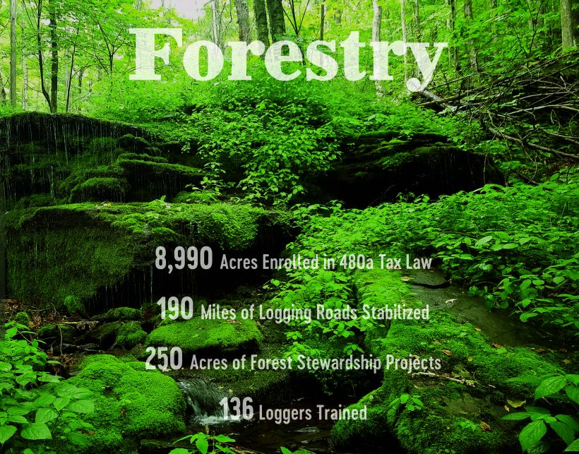 Forestry: Protecting Water Quality with Forestry Best Management Practices
