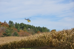 Aerial Crops 12