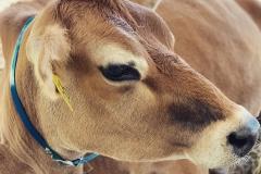 dairyfest3