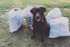 Lorinda's pup in Walton, NY