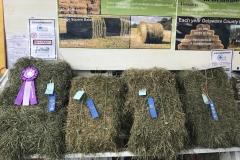 Hay Winners