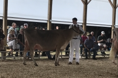 Open Dairy Show