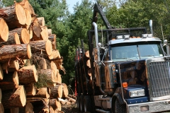 timber_production