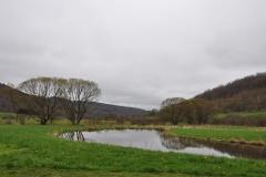 Scenes from Wildflower Farm