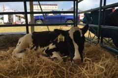 Dairy Fest 21