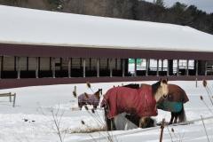 Winter Storm Stella4- Phoenix Farm