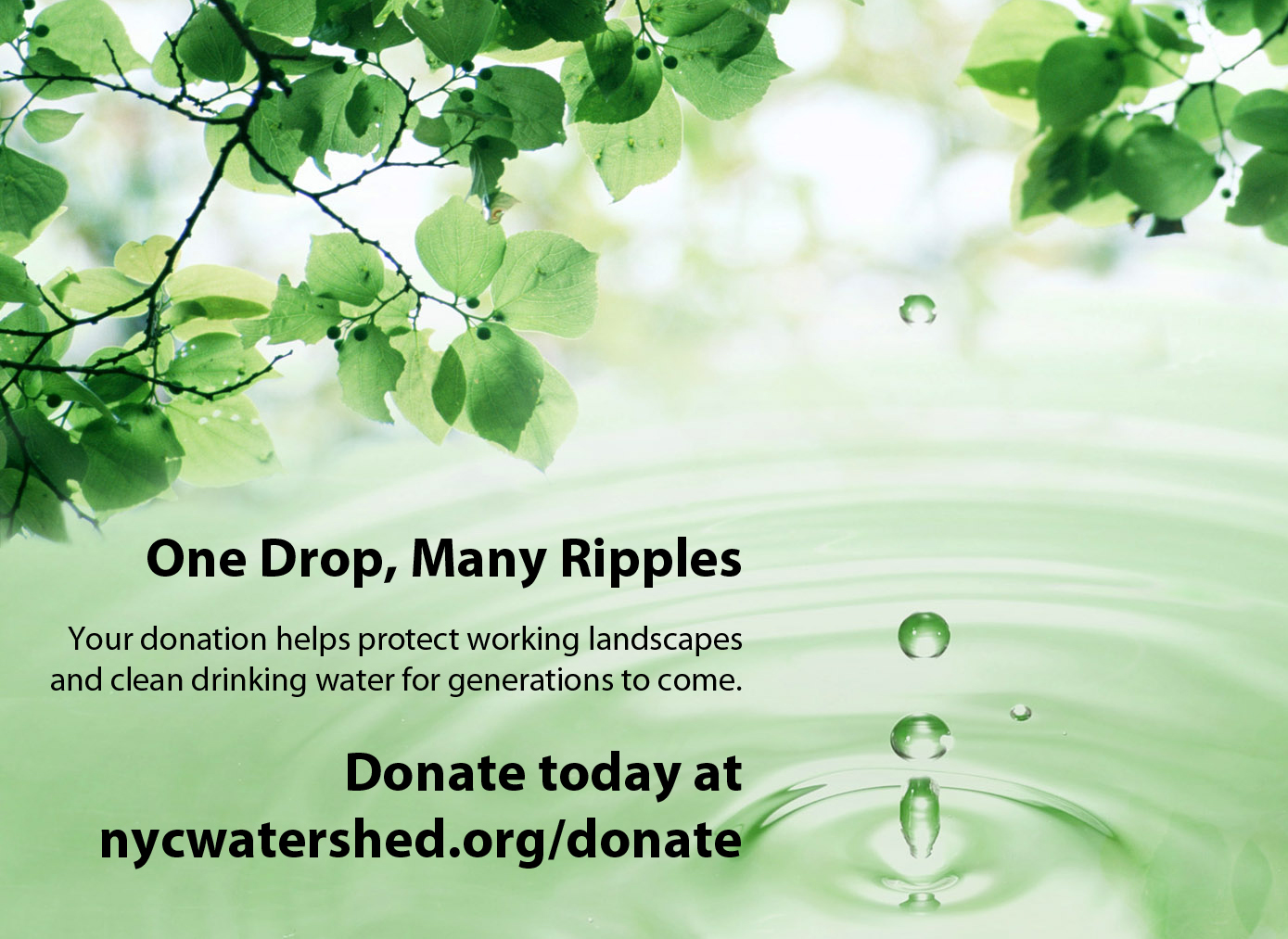 www.nycwatershed.org/donate