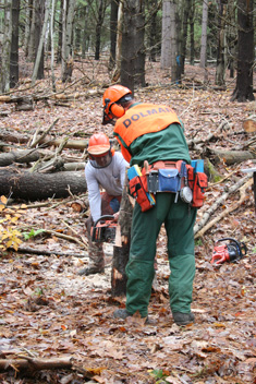 Logger & Forester Training